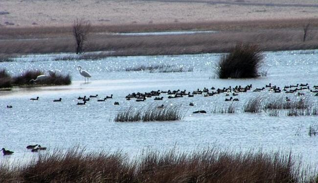 Ornitološki rezervati i ljekovita blata 01